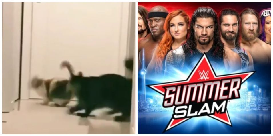 Fight video: Not only humans but cats are also crazy over WWE Summerslam