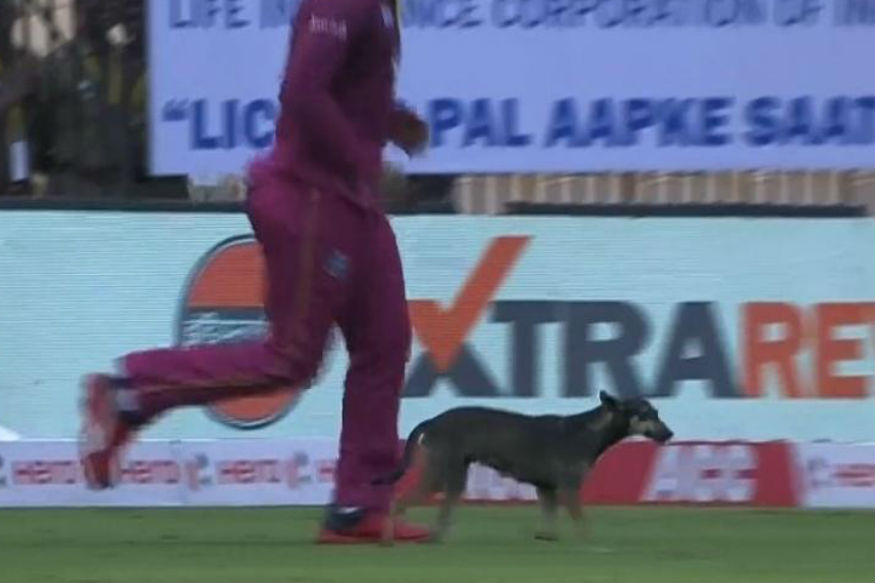Video: A stray dog stopped play during India vs West Indies 1st ODI